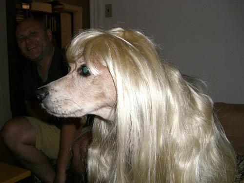 Blond Bruno